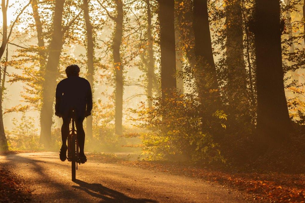 Cykelruter | Cykelstier | Planlæg din rute